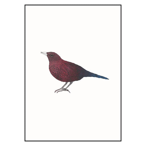 bethan wyn williams European Starling Screen Print - Red Blue - A4