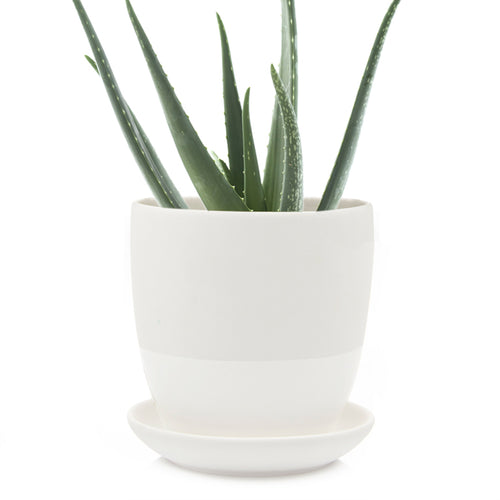 Chive - Big Dyad Plant Pot and Saucer - White