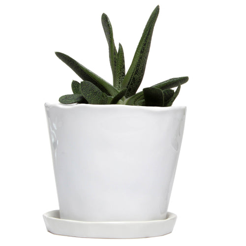 chive Big Tika Planter and Saucer - White