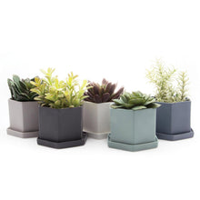chive Hexi Planter and Saucer - hexagonal set