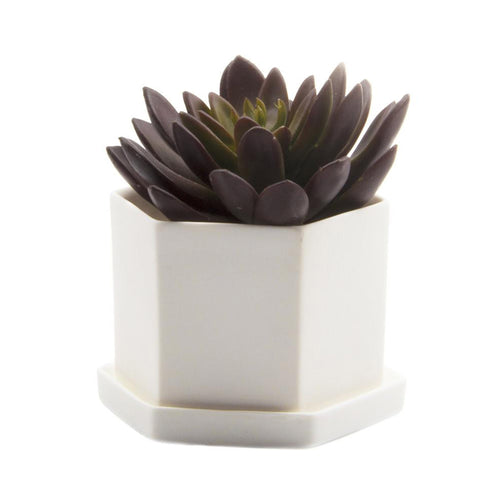 chive Hexi Planter and Saucer - white