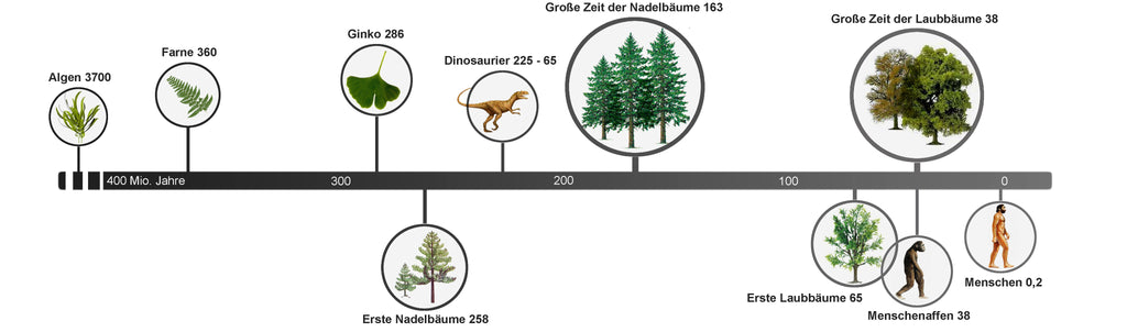 Timeline of trees and humans