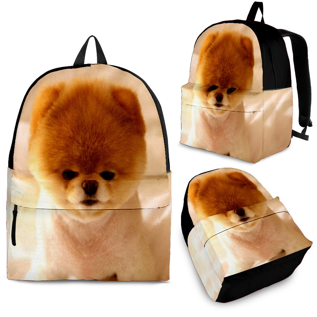 Pomeranian Back pack