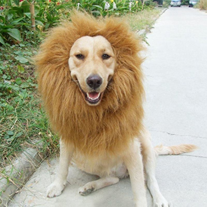 Lions Mane for Dogs Costume