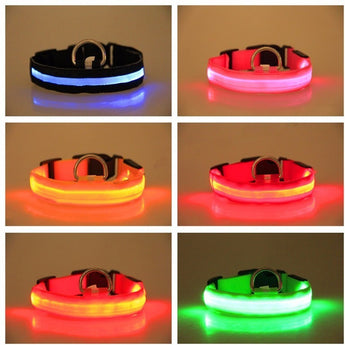 LED Safety Dog Collar FREE Offer ORDER TODAY AND JUST FOR SHIPPING & HANDLING