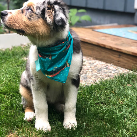 Bottle Brook Trout/Dots Dog Bandana