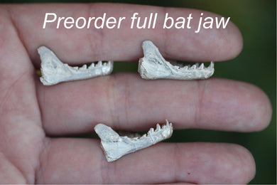 preorder bat jaw