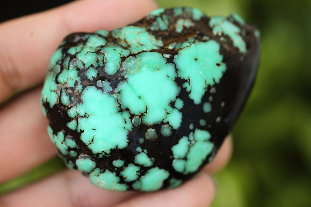 Natural High grade Damele turquoise rough 81.7 grams