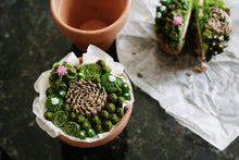 Pre-Order Mini-Cake Potted Succulents