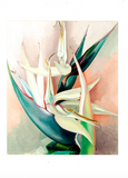White Bird of Paradise - notecard