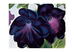 Black and Purple Petunias - Notecard
