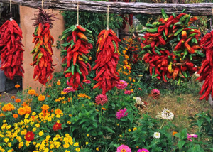 Chile Ristras & Flowers- notecard