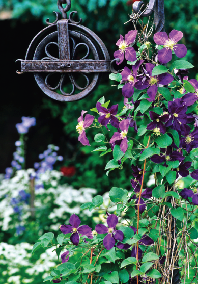 Harpe Garden Well Pulley- notecard