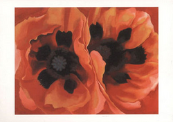 Oriental Poppies - Notecard