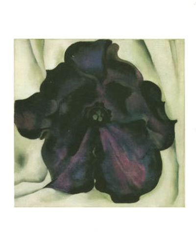 Untitled (Purple Petunia)