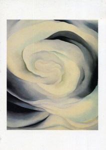 Abstraction White Rose