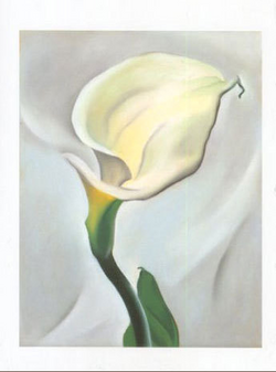 Calla Lily Turned Away, 1923 - Notecard