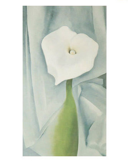 Calla Lily on Grey