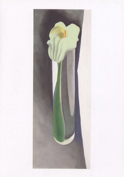 Calla Lily in Tall Glass