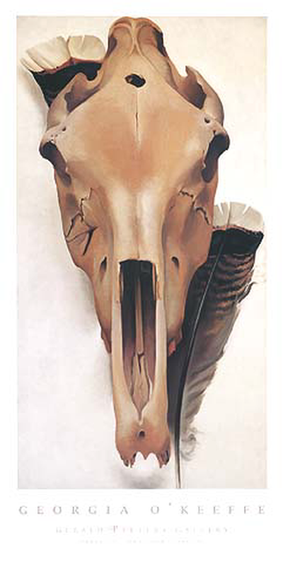 Mule Skull with Turkey Feathers