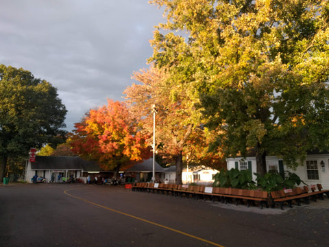 Trees in their autumn splendor at NY Sheep and Wool