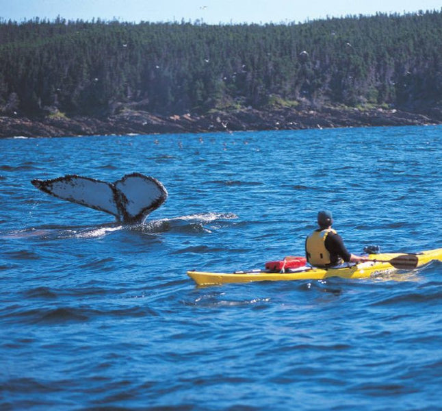 10 things to do in Newfoundland and Labrador (via TheStar)