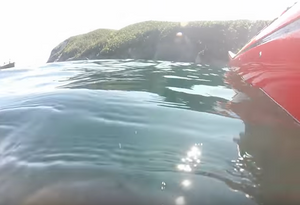 Another July 2017 Whale day (via Stan Cook Sea Kayak Adventures)