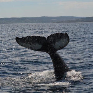 Here's to #NLIcebergs, #NLWhales, and another amazing summer!!!