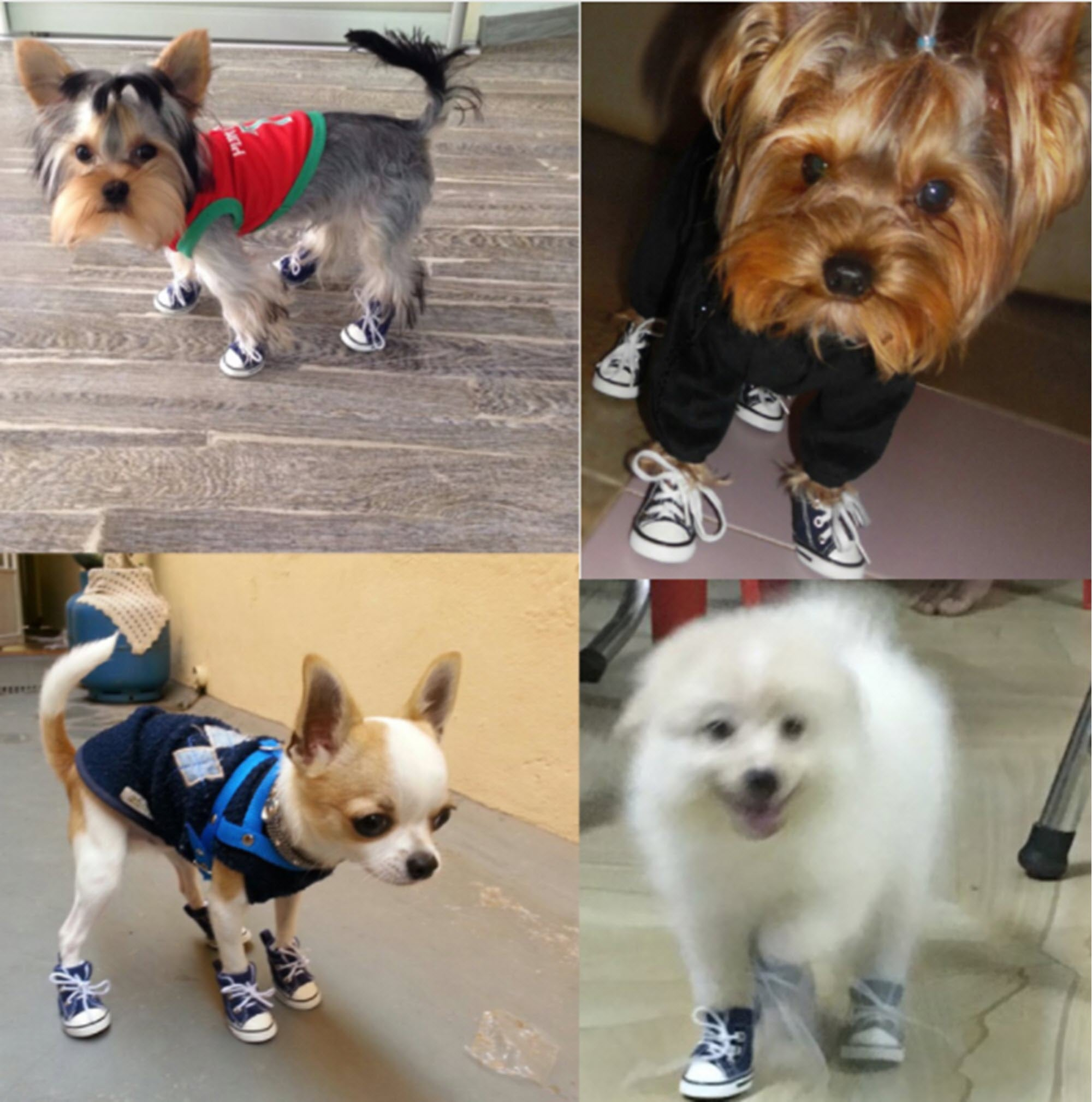 Dog Casual Anti-slip Sneaker Boots