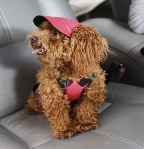 TAILUP Dog Baseball Cap - Free Plus Shipping Promotion