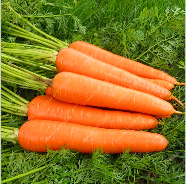 200pcs/bag carrot seeds Organic Heirloom seeds vegetables fruit  Five inches ginseng carrot seeds potted plant for home garden