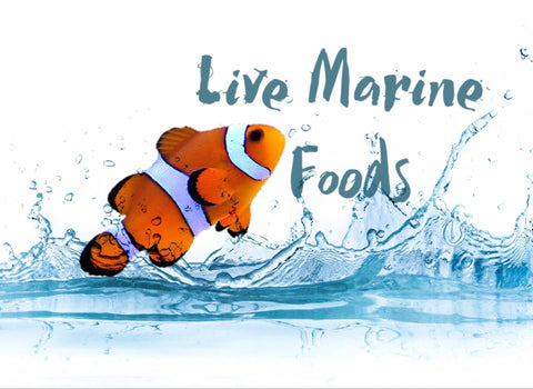 Live marine fish Foods