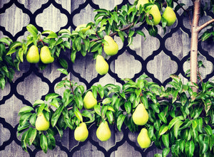 Plants climbing across a moroccan inspired trellis by Screen With Envy