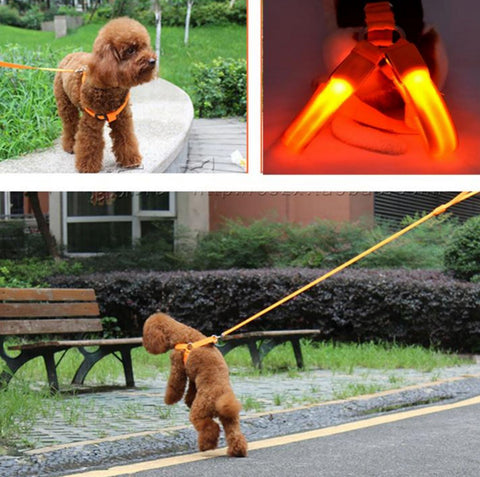 Medium LED PetBright Dog Harness