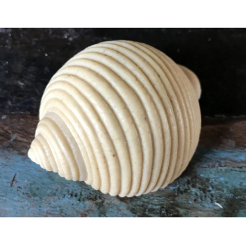 Bonnet Shell Soap