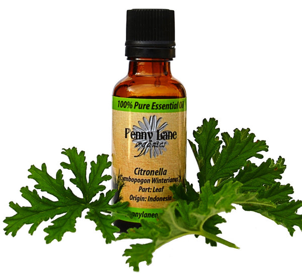 Citronella Essential Oil 30 ML-Penny Lane Organics