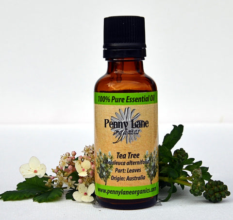 Tea Tree Australian Essential Oil 30 ml-Penny Lane Organics