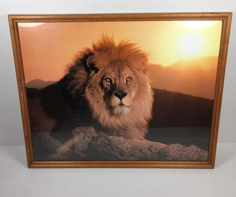 "17 x 21"" Framed Wall Art Photography Lion Picture Print"