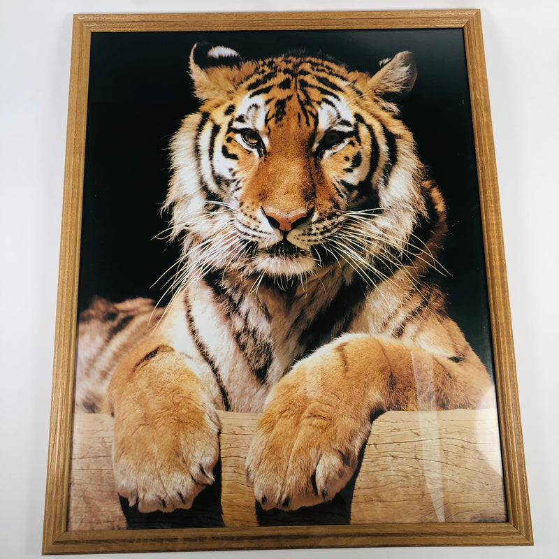 Framed Wall Art Photography Bengal Tiger Picture Print