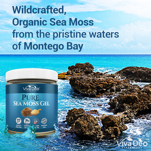 Pure Sea Moss Gel | Nature's Multivitamin - Natural, Wildcrafted, and Organic from the Pristine Waters of Montego Bay | Fresh and Handmade in The USA - For Immune Support, Thyroid, Digestion...16 oz