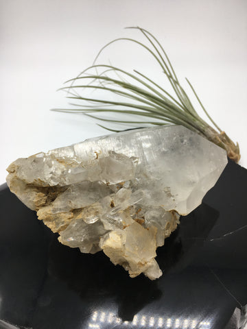 Himalayan Quartz - HQ7 - Earthly Secrets