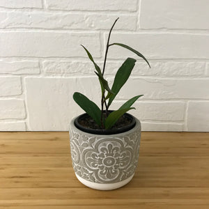 "4"" Concrete Pattern Plant Pot - Floral"