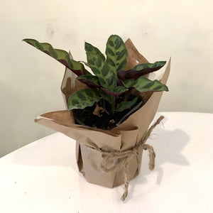 Monthly Plant-a-palooza Subscription
