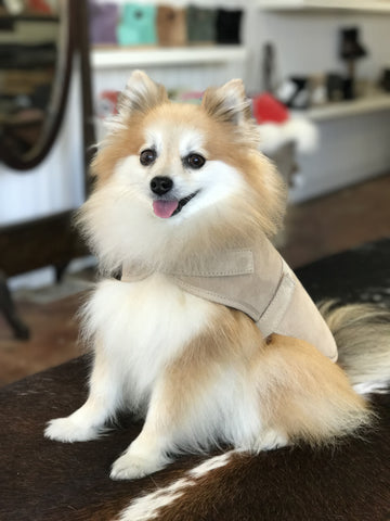 Sheepskin Dog Jacket