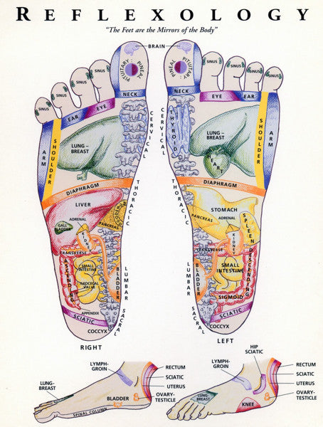 Reflexology Chart For Bongers - Feet
