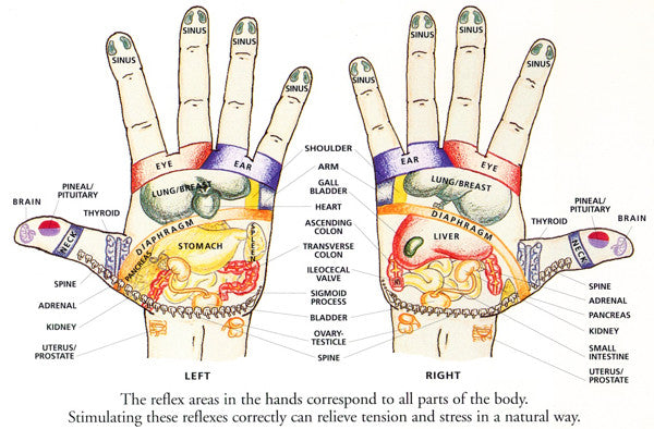 Reflexology Chart for Bongers - Hands
