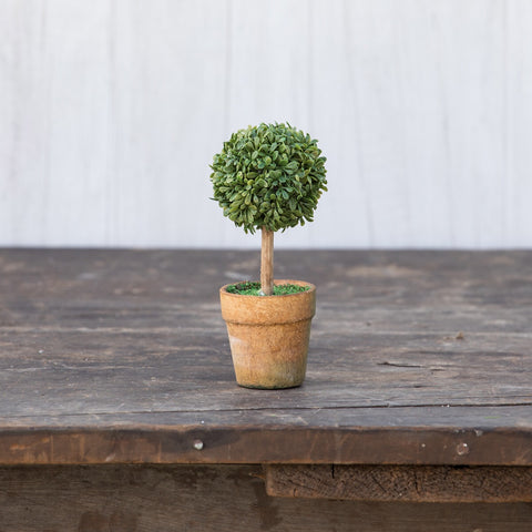 6 IN MINI BOXWOOD SINGLE TOPIARY