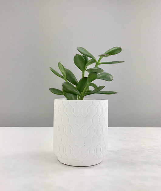 Lucky Plant + Patterned