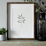 Leaf Stem Pen & Ink Print