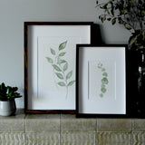 Eucalyptus Stem Watercolour Print